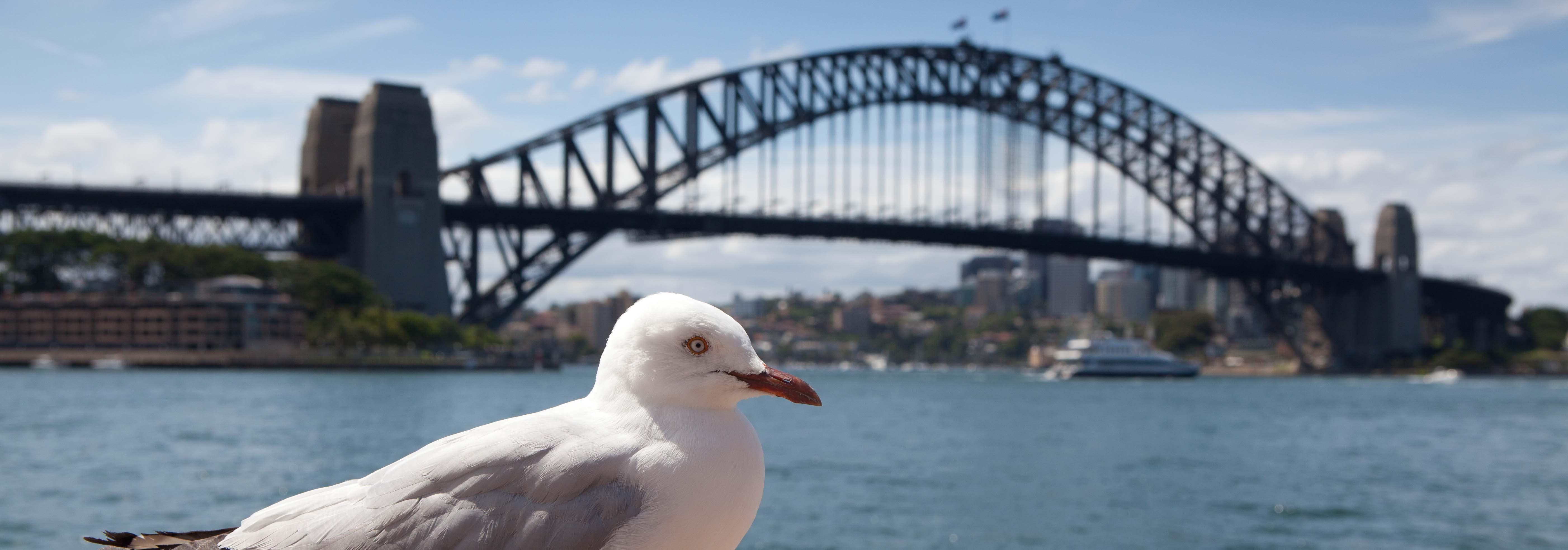 Australia país con mayor reputación en el mundo