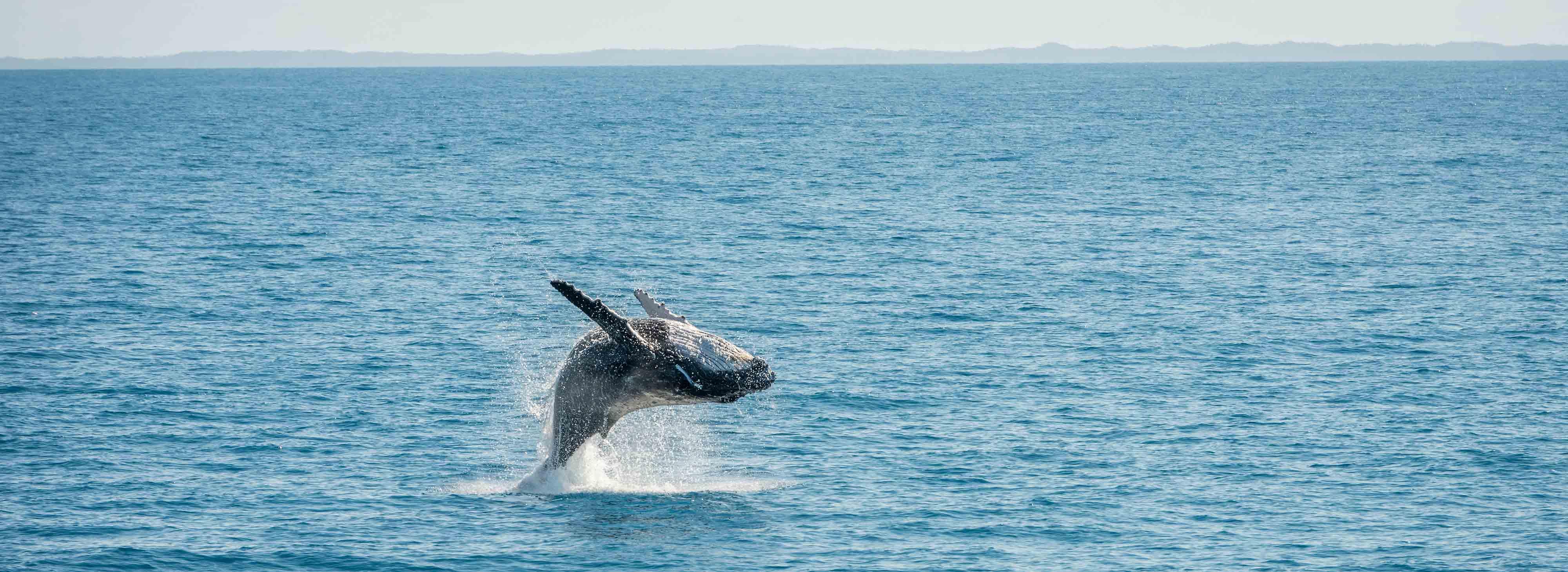 Ballenas en Australia