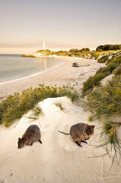 Que hacer en Perth - Rottnest Island